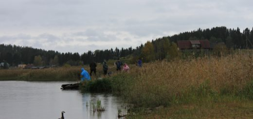 Yksinäinen valkoposkihanki katselee Kalakurkien touhuja Kurkijoen laivalaiturilla.