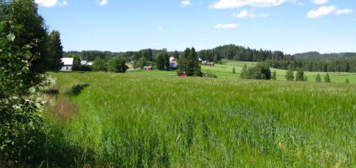 Sodan jälkeen Tyrjän kylää jäi sekä Suomen että Neuvostoliiton puolelle. Tässä Suomen puolelle jäänyttä osaa nykyään. Kuva: Wikipedia
