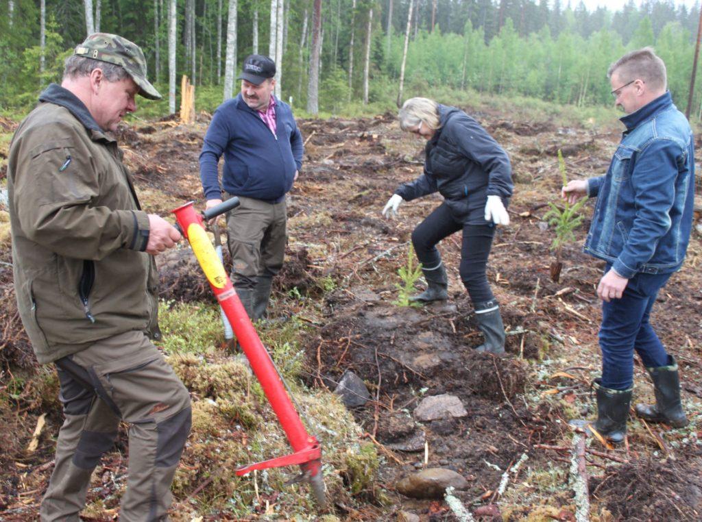 Valmiiksi muokattuun palstaan oli helppo istuttaa. Istuttajina Antti Reijonen, Pekka Ahokas, Anne Lahtela ja Pertti Hakanen.