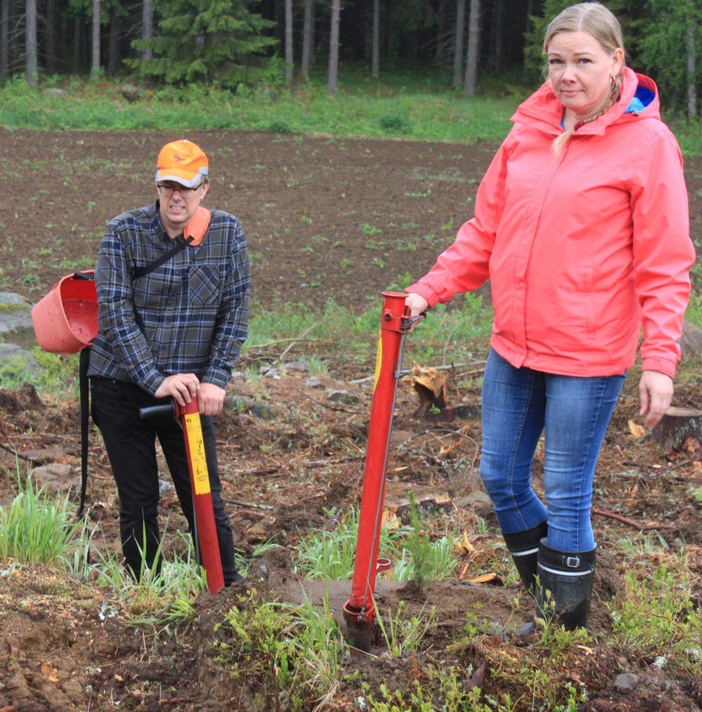 Taina Suvila istutti elämänsä ensimmäisen puun, opastusta hän sai yhteismetsän toiminnanjohtaja Juha Simolalta.