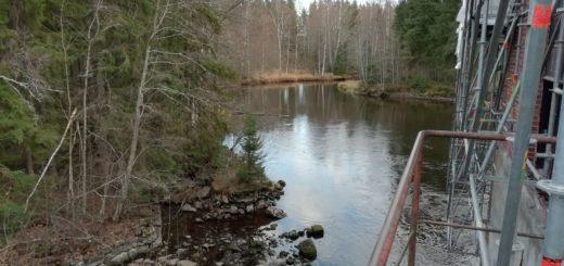 Laatokan lohi pääsee nousemaan Kangaskosken alapuolelle, sen nousua on seurattu veteen asennetulla kameralla. Venäjän rajalle on tästä matkaa muutama sata metriä.